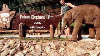 Patara Elephant Farm: Once in a lifetime experience!