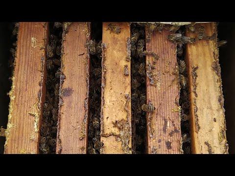 Пчела в клубах, ноябрь