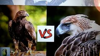 PHILIPPINE EAGLE VS MONGOLIAN GOLDEN EAGLE!!!! WHO WOULD WIN???