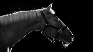 Walls|| Horse Jumping Music Video