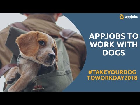 Take your dog to work by working with dogs   AppJobs.com ...