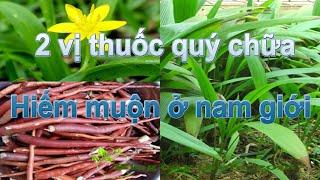 2 vị thuốc quý chữa hiếm muộn ở nam giới