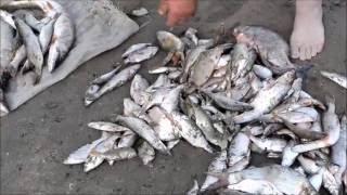 Рыбалка в пашино новосибирск