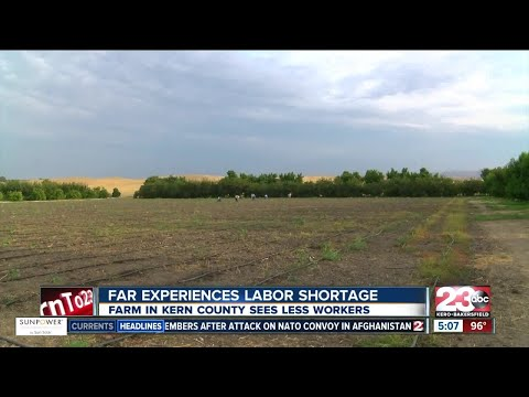 Kern County farm experiences labor shortage