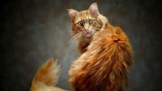 Смешные кошки :)  Часть 257 - Тотальная защита:))