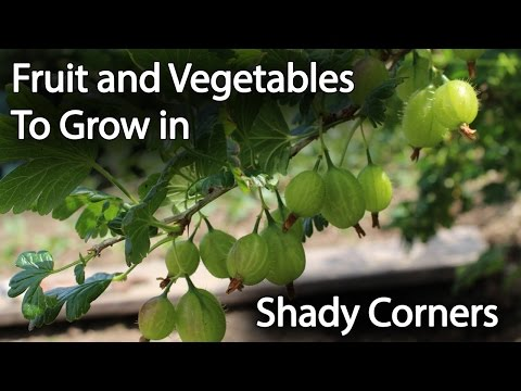 Fruit & Vegetable Plants to Grow in Shade