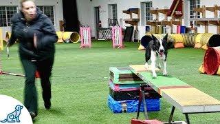 Dog Agility Training With Kayl McCann