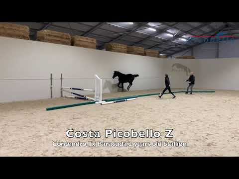 Costa De Will Z @ home 2 years old
