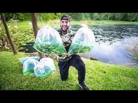 Stocking Pond With $300 JUMBO Wild Shiners!!! (riding a cow)