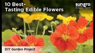 10 Best-Tasting Edible Flowers With Black Gold®