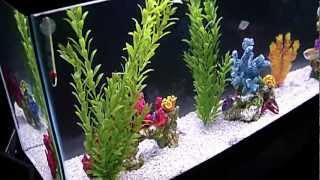 Our Gorgeous Freshwater Tank