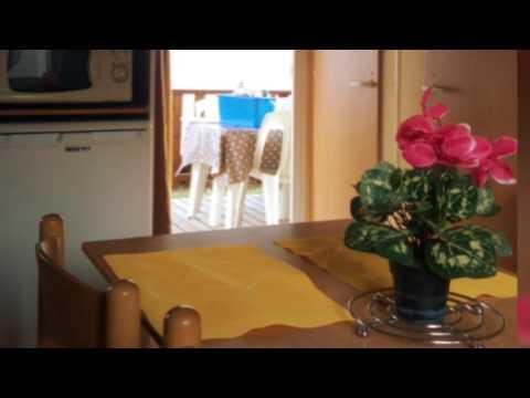 Mimosa/Lavande/Marguerite