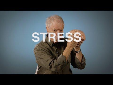Film: Vad händer i hjärnan när vi stressar?
