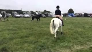 Atherstone Pony Club Camp 2015