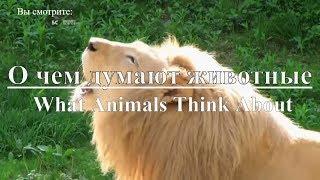 Discovery: О чем думают животные | What Animals Think About. Документальный фильм