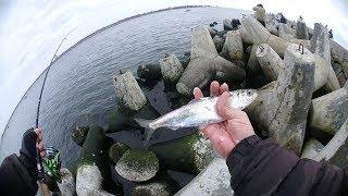 Рыбалка в балтийске сегодня