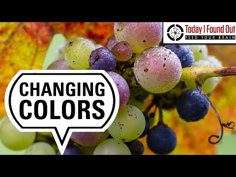 Why Fruits Change Color and Flavor as They Ripen