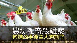 思浩話你知中國農場離奇偷雞案,凶手殘殺後仲識埋屍,拘捕後農場主人尷尬了!(大家真風騷)