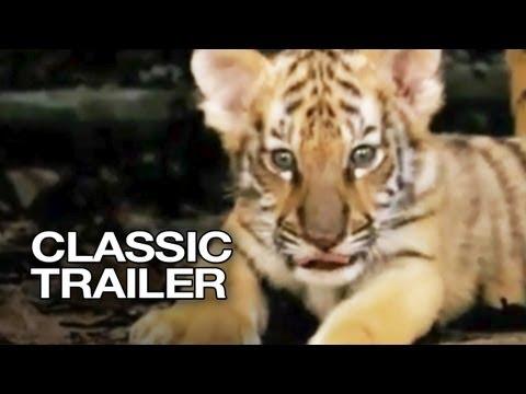 Perheleffa: Tiikeriveljekset