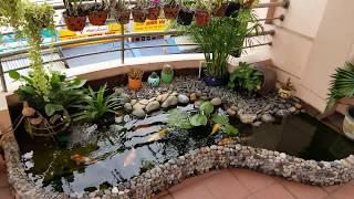 The Beautiful Mini Koi Fish Pond In The Balcony | Hồ Cá Chép Nhật Nhỏ Tuyệt đẹp Trên Ban Công.