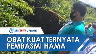 Dibunuh Selingkuhan, Pria Ditemukan di Kebun Teh di Jambi Diberi Obat Kuat Ternyata Pembasmi Hama