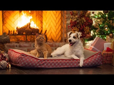 Special - A Very Happy Yule Log - Hallmark Movies & Mysteries