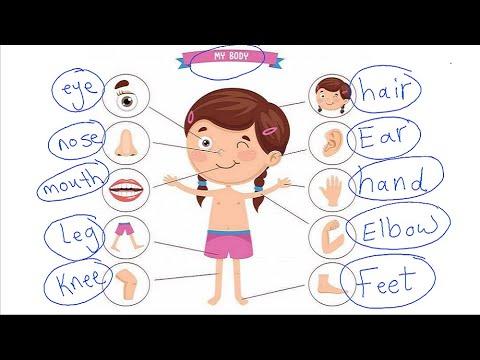 talb online طالب اون لاين اجزاء الجسم للاطفال بالانجليزي Miss Marwa Saeed