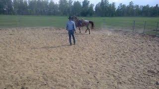 лошадь,обучение лошади