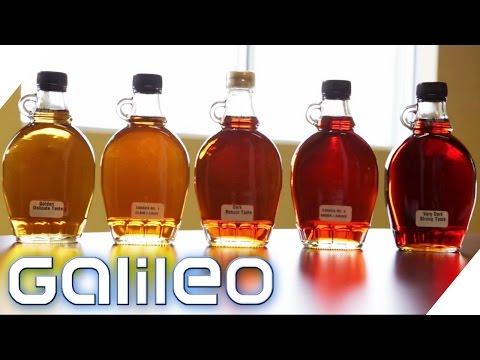 So entsteht kanadischer Ahornsirup | Galileo | ProSieben