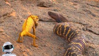 ЗМЕЯ В ДЕЛЕ / Змея против Крокодила, Гадюки, Собаки