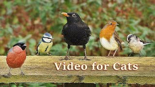 Videos for Cats to Watch : Birds in My New Garden - 8 HOURS