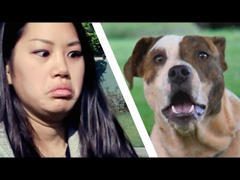 People Meet Pit Bulls For The First Time
