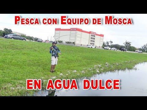 Pesca de lobina/blackbass mayans/mojarra roja con mosca