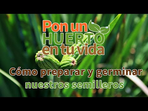 Semillas de  Espinaca Butterflay 250 g