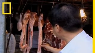 Would You Eat Bull Penis? | National Geographic