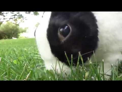 Rabbit scares ducks!