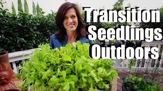 How to Transition Indoor Seedlings to Outdoors (Hardening Off) / Spring Garden Series #3