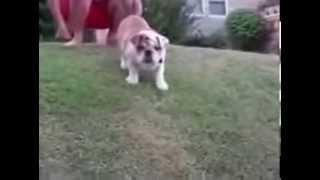 Собаки   РЖАЧ!!!!!
