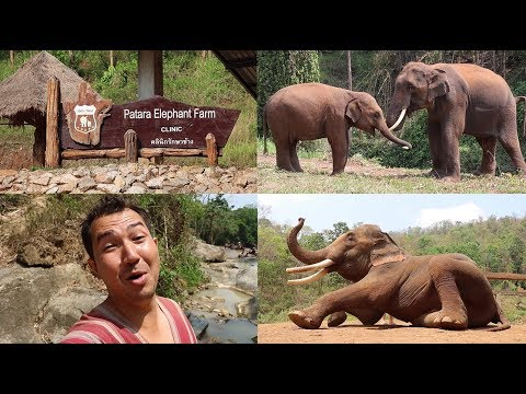 A Day at Patara Elephant Farm in Chiang Mai Thailand