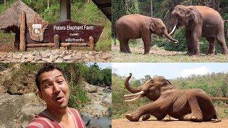 A Day at Patara Elephant Farm in Chiang Mai Thailand