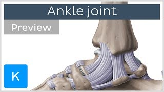 Ankle joint: bones and ligaments (preview) - Human Anatomy | Kenhub