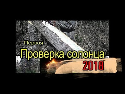 Первая проверка солонца 2018. The first test of the salt lick 2018.