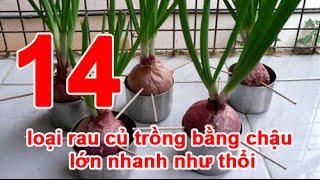 14 loại rau củ trồng bằng chậu lớn nhanh như thổi