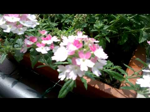 Foto Nokia Lumia 630: Test video HD 720p
