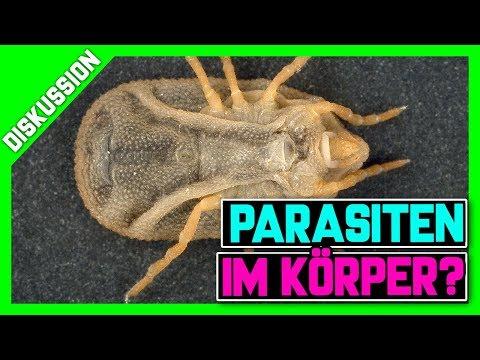 Die Würmer und aspirin