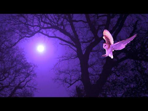 Sleeping Deeply | 528Hz Tranquil Sleep Meditation Music