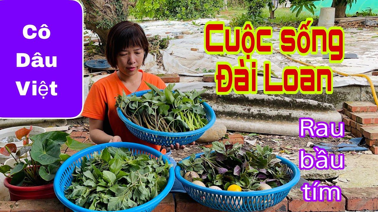 Cuộc sống Đài Loan | Cô dâu Việt ra vườn hái rau dền, rau muống, sơ ri, chanh dây, rau bầu tím