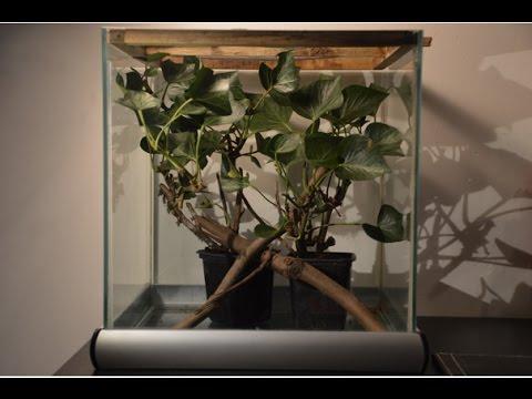 Stick Insect terrarium setup