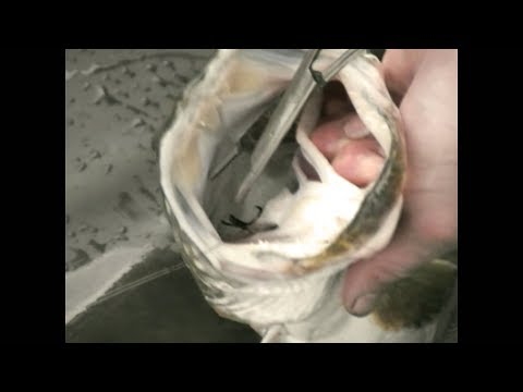 How to unhook a pike safely (video tutorial)