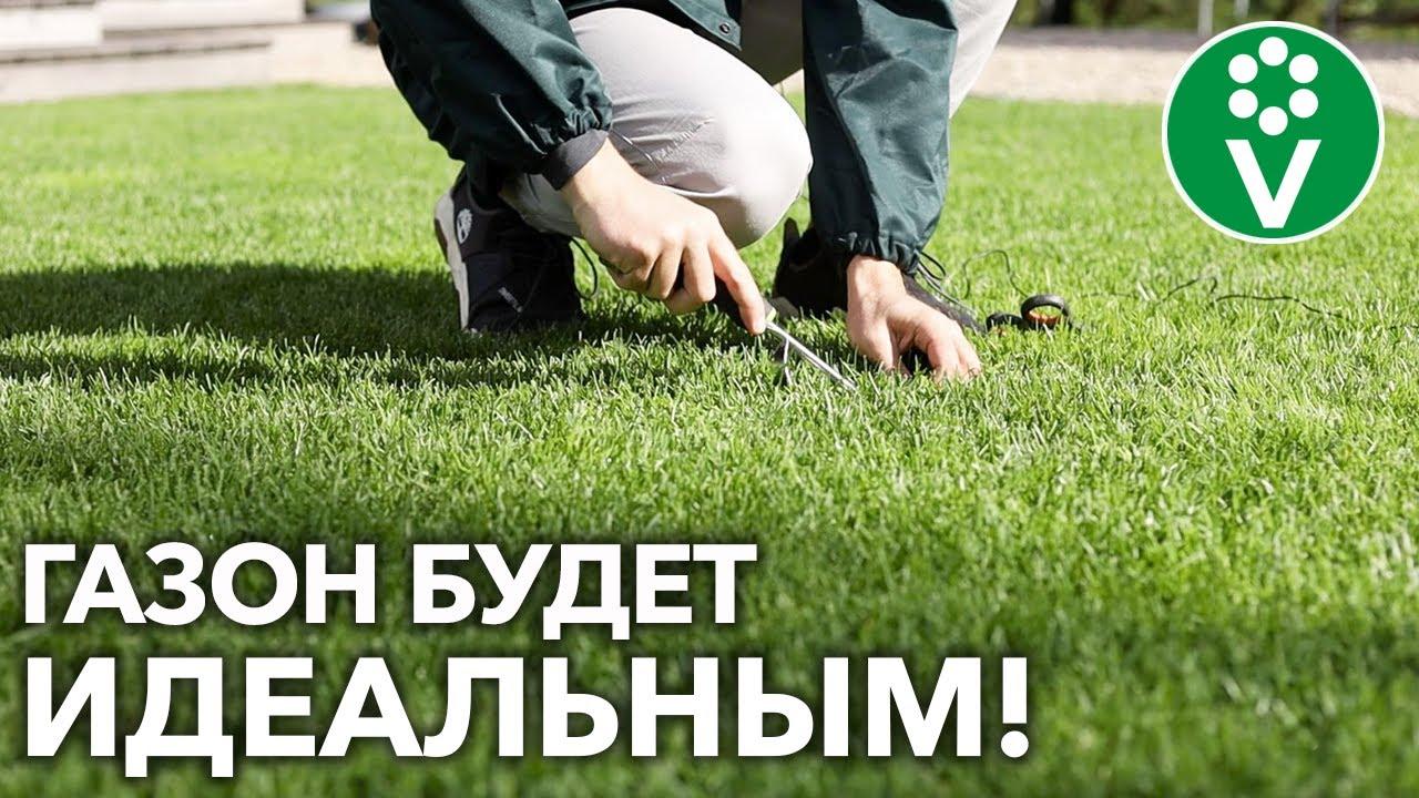 ГАЗОН ДЛЯ ЛЕНИВЫХ! Сделайте ТАК в сентябре и отдыхайте!